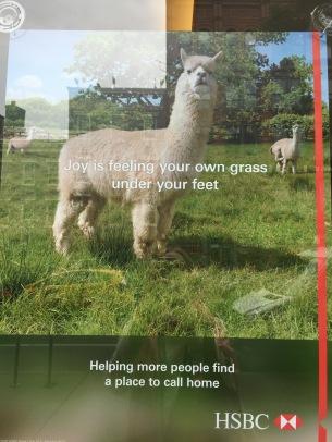 Llama HSBC ad