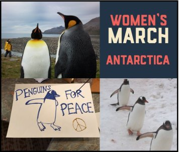 penguins-for-peace