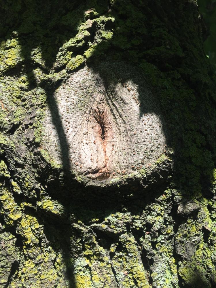 pussy tree